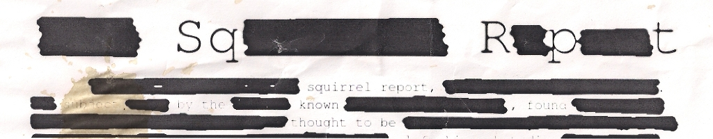 The Squirrel Report