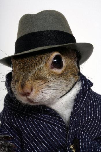 Squirrel-hat