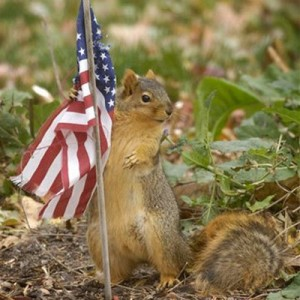 Squirrel-flag2