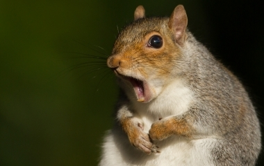 HotSpot_Shocked_Squirrel_001